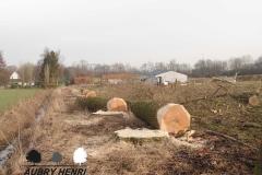 Abattage - Entreprise Parcs et Jardins Henri Aubry